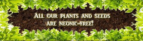 Neonicitinoid Free Plants & Seeds