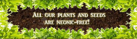 Neonicitinoid Free Plants & Seeds