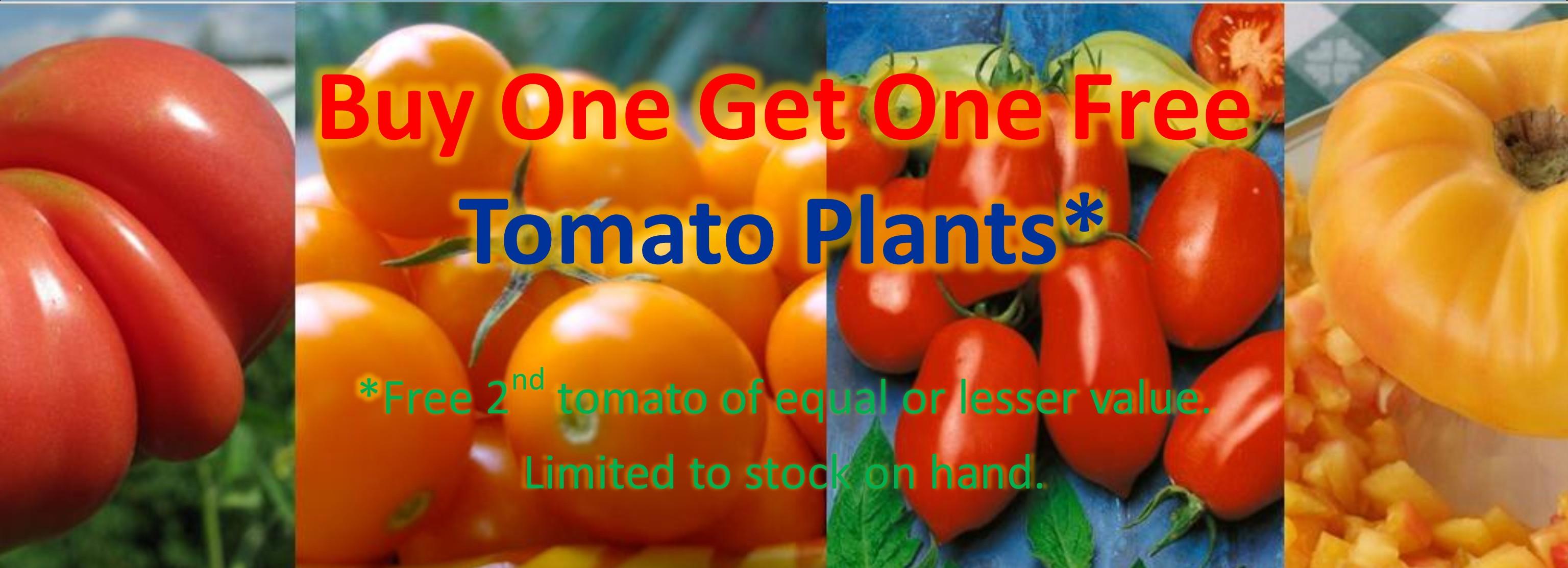 BOGO Tomato Plants